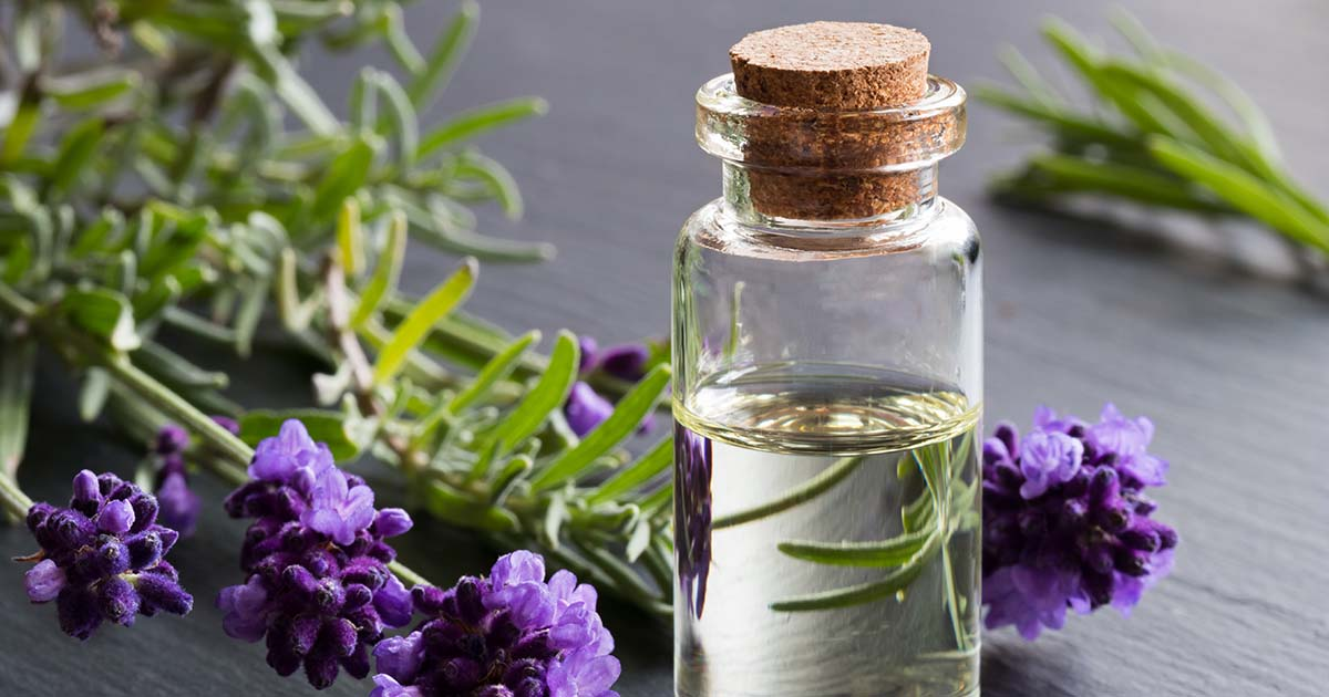 A bottle of lavender essential oil with fresh lavender twigs